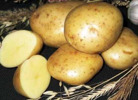 Описание среднеспелого крупного сорта картофеля «великан»