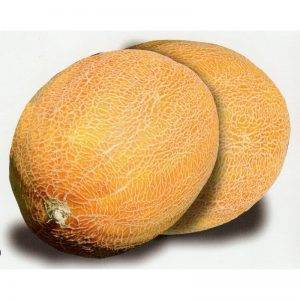 Мини-дыня ананас американо. дыня ананасная: характеристики наиболее распространенных сортов и условия выращивания дыня американский ананас посадка и уход