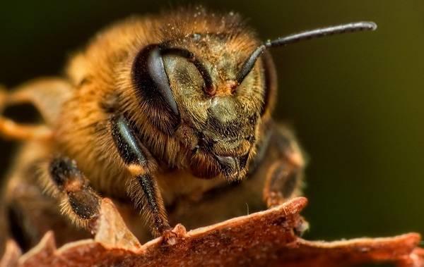 Спаривание пчелиных маток | практическое пчеловодство