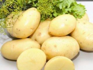 Картофель латона: описание сорта, фото, отзывы, достоинства и недостатки, посадка и уход, описание сорта фото отзывы.