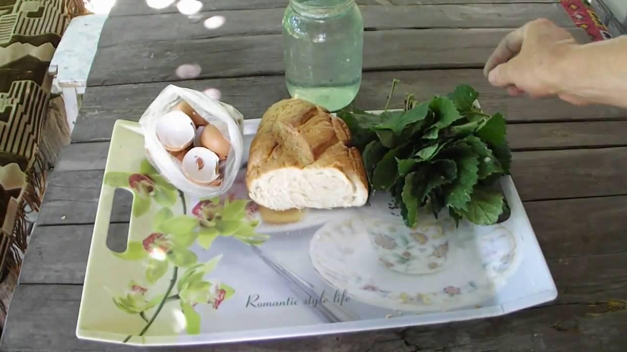 Польза и вред популярного удобрения из крапивы