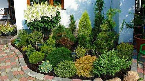 Рододендроны в ландшафтном дизайне, схемы посадки и лучшие соседи в саду, фото