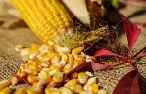 Декоративная кукуруза