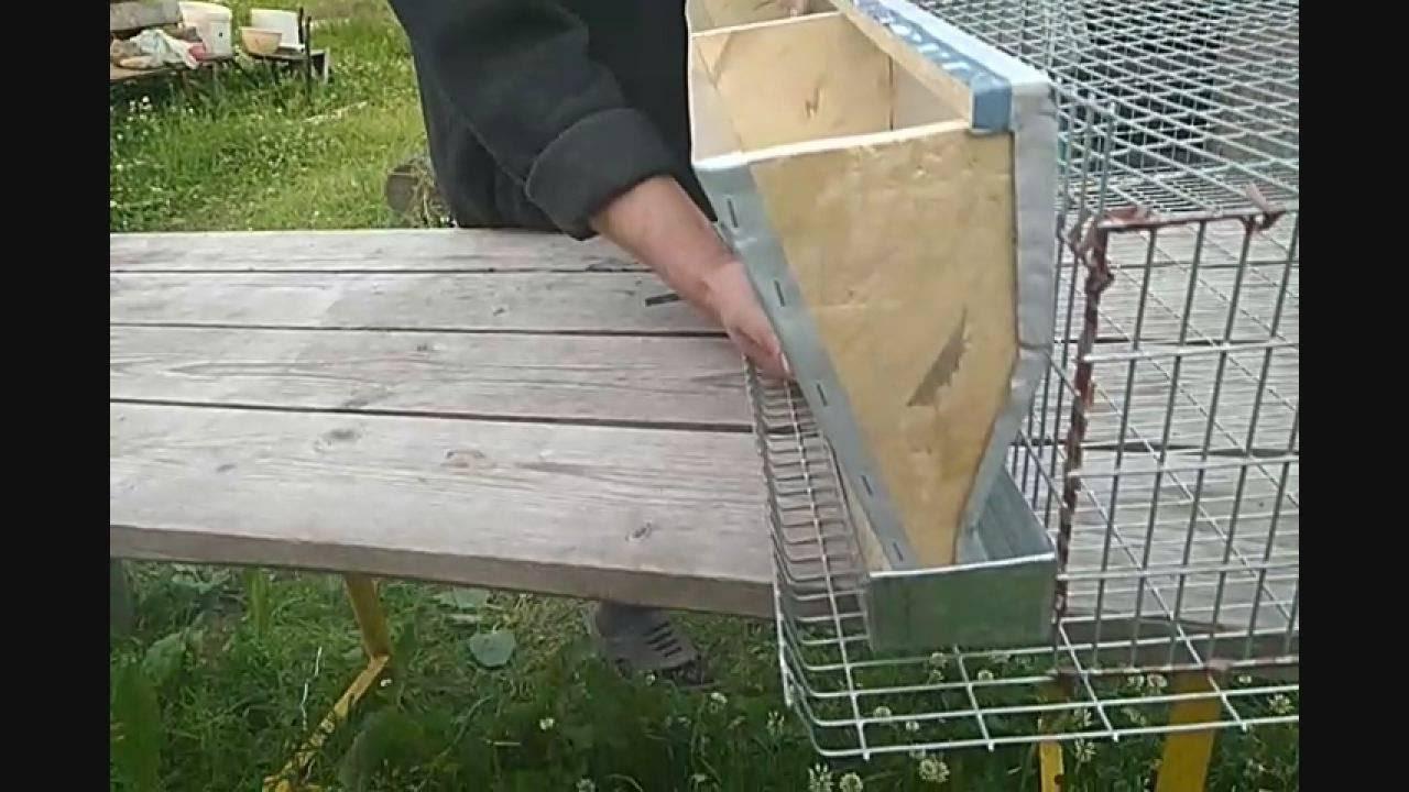 Как сделать кормушку для перепелов своими руками?