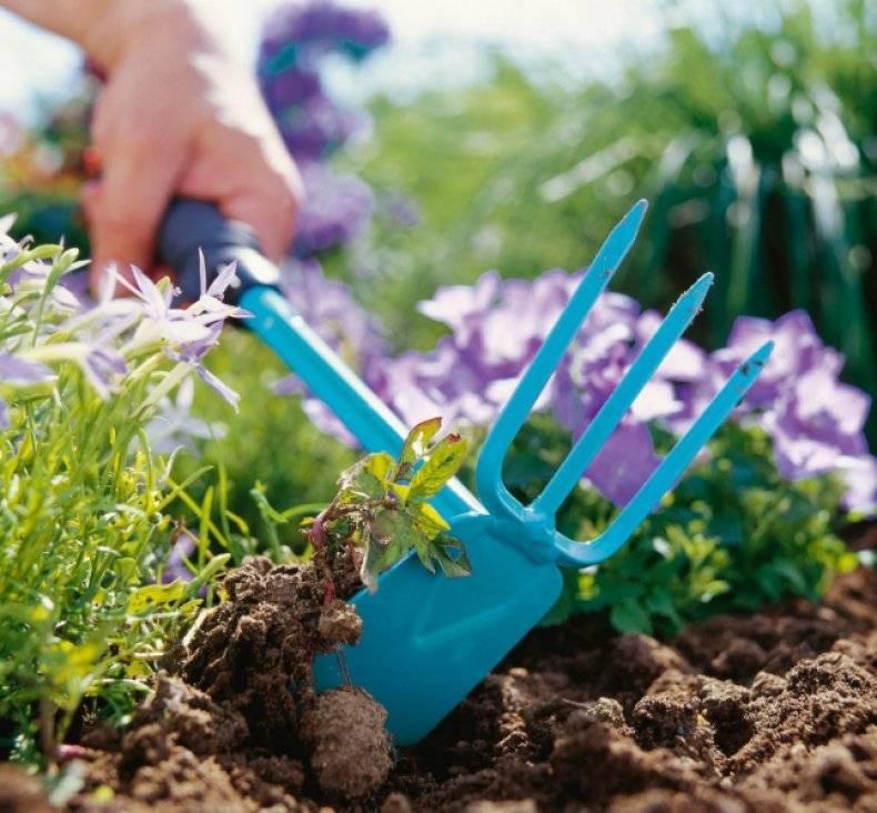 Как вывести пырей с огорода, дачного участка навсегда? как избавиться от пырея химией, гербицидами, сидератами, народными средствами
