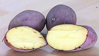 Полюбившийся садоводам и дачникам из всех уголков мира — картофель наяда: описание сорта, отзывы