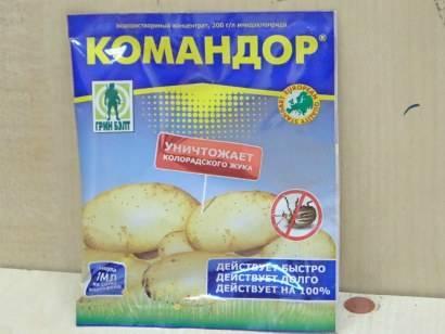 Командор: обработка картофеля перед посадкой и правила использования препарата
