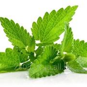Шандра - пряно-вкусовые культуры - овощные культуры - greeninfo.ru