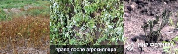 Как применять агрокиллер от сорняков: инструкция