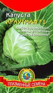 Описание сорта капусты краутман f1