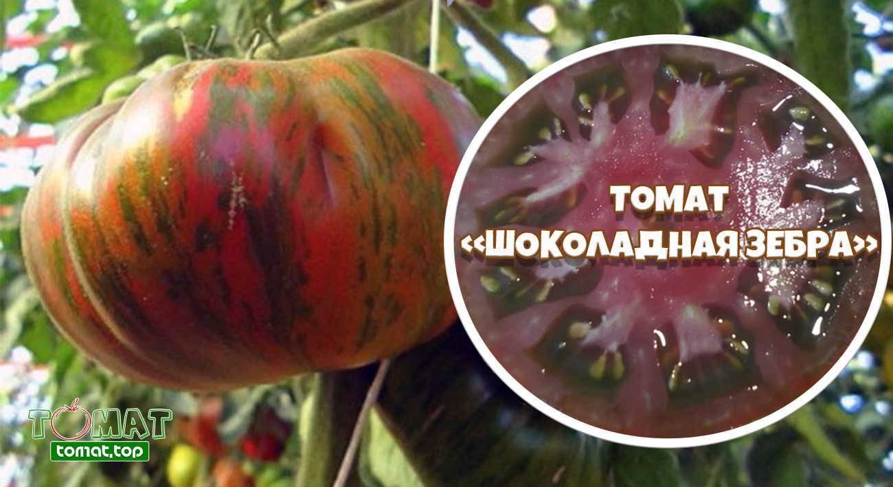 Томат перцевидный полосатый: описание сорта, советы по выращиванию, отзывы