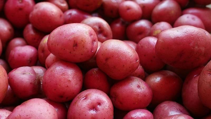Сорт картофеля «пироль (pirol)» – описание и фото