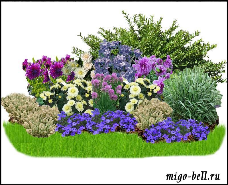 Миксбордеры в саду – 2