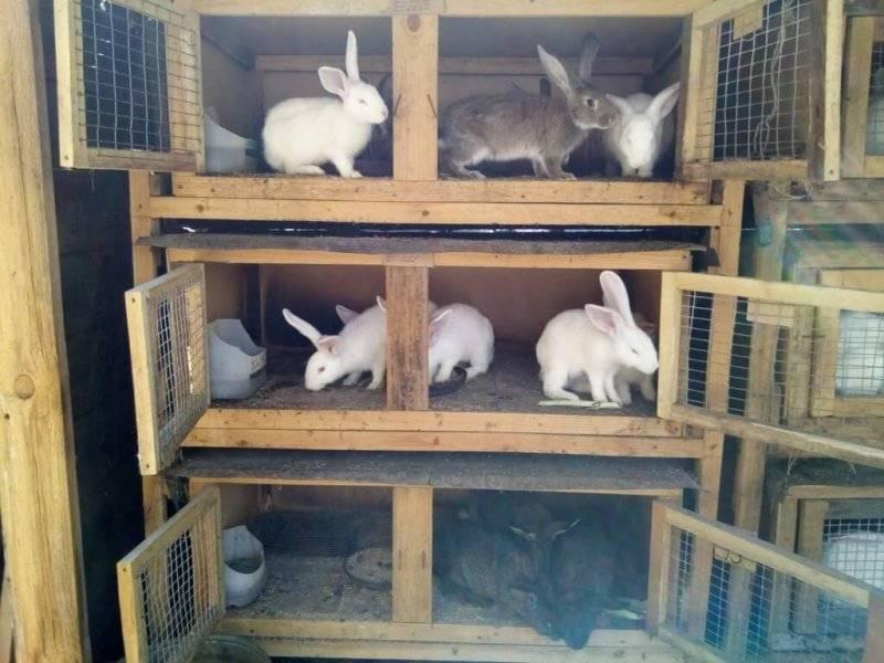 Как сделать клетку для кроликов своими руками.