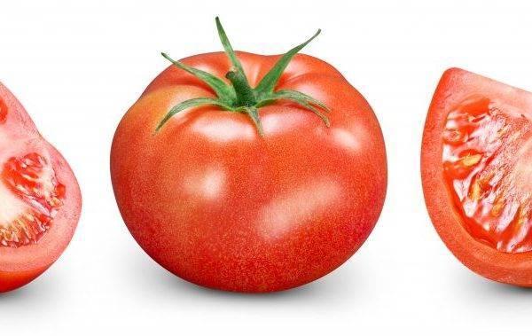Томат мохнатый шмель: характеристика и описание сорта, урожайность с фото