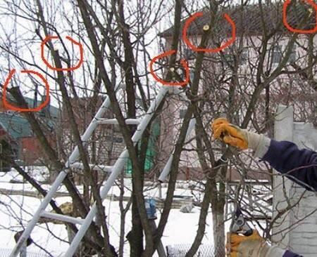 Способы снегозадержания и сохранения снега в саду. снегозадержание на полях и участке: задержим снег на участке как задержать снег на полях