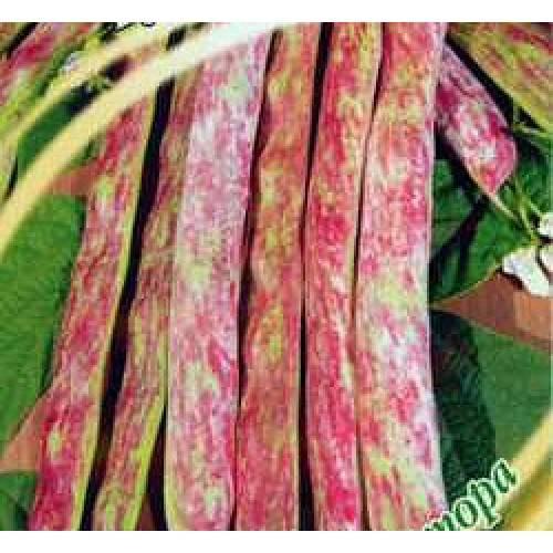 Все о лучших сортах спаржевой фасоли для грунта: описание, выращивание)