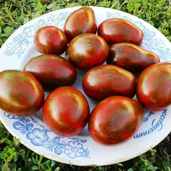 Томаты «черный мавр»: советы по выращиванию и уходу за красивыми и вкусными помидорами