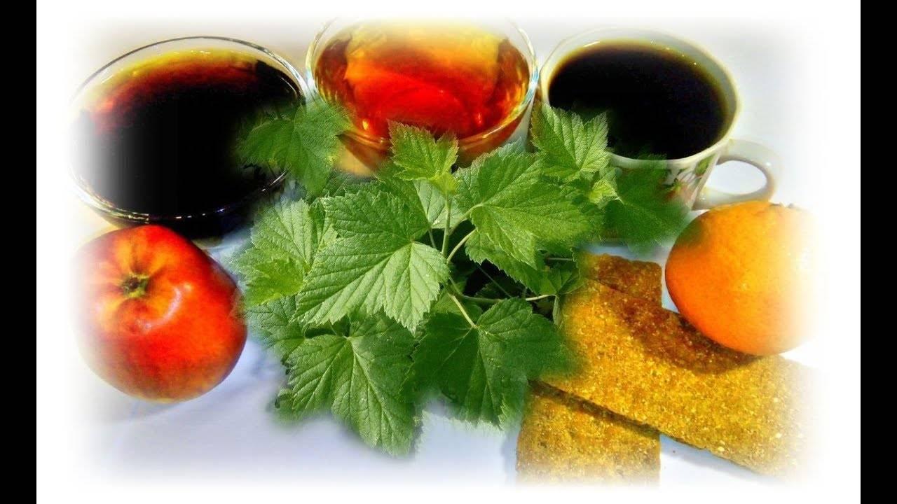 Ферментация листьев смородины в домашних условиях. ферментированный чай из листьев смородины