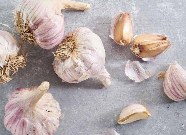 Сорта чеснока: фото с названиями и описанием