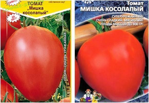 «мишка косолапый» — высокоурожайный сорт помидор