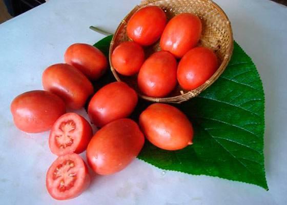Чем хорош сорт томатов челнок и какие могут возникнуть проблемы при выращивании?