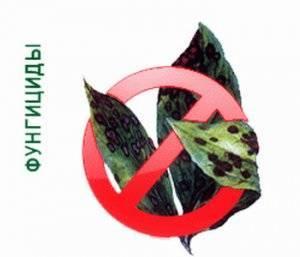 Фунгицид купроксат — инструкция по применению, дозировки для разных растений