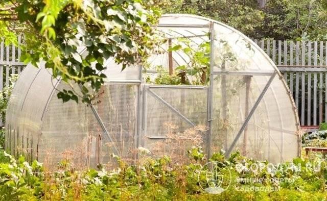 Огурец либелле: описание и выращивание