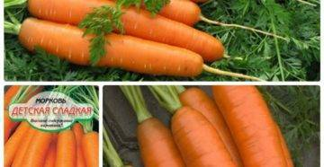 Морковь анастасия f1 — описание сорта, фото, отзывы, посадка и уход