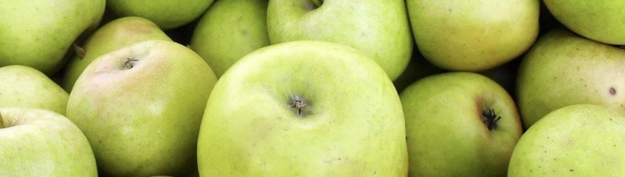 Особенности посадки и ухода за яблоней «чудное»
