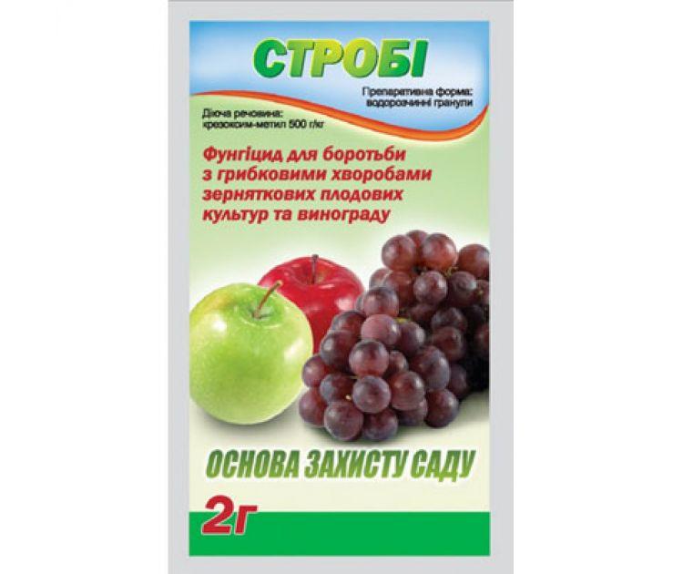 Строби для винограда: инструкция по применению препарата, срок ожидания, обработка
