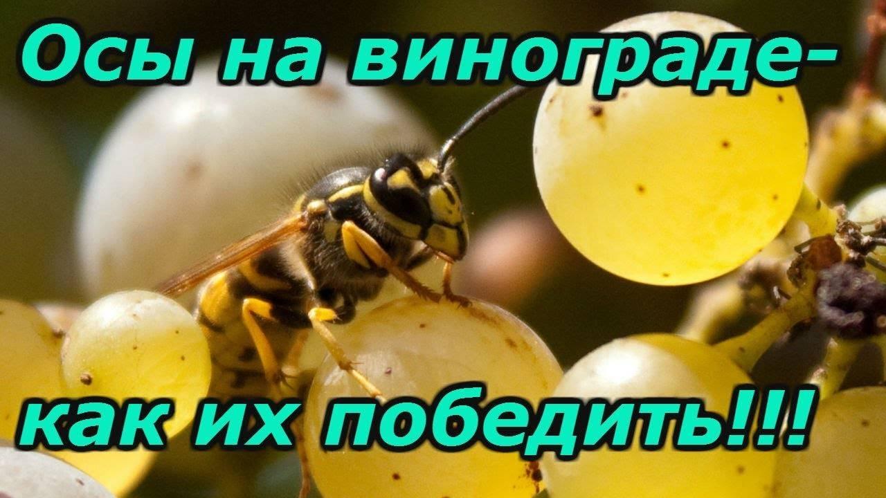 Как можно избавиться от пчел на даче под крышей, как бороться с осами на участке