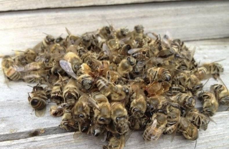 Настойка пчелиного подмора: применение ирецепты приготовления, особенности иотзывы