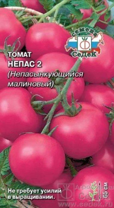 Низкорослые (супердетерминантные) томаты: лучшие сорта для открытого грунта и теплицы