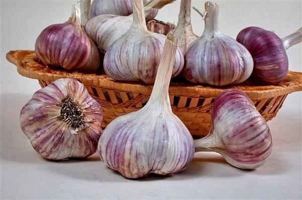 Выращивание чеснока как бизнес: рентабельность, отзывы, бизнес план