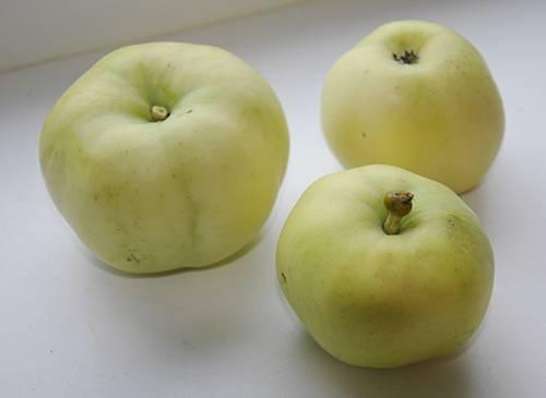 Яблоня белый налив: 3 причины, почему дерево не плодоносит