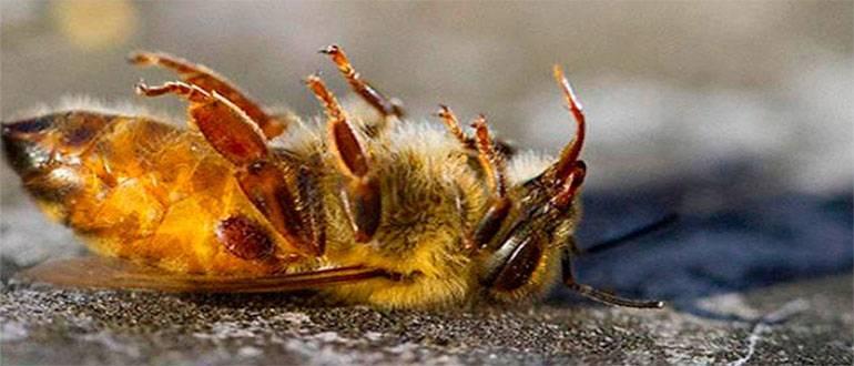 Что такое паралич пчел его признаки и лечение