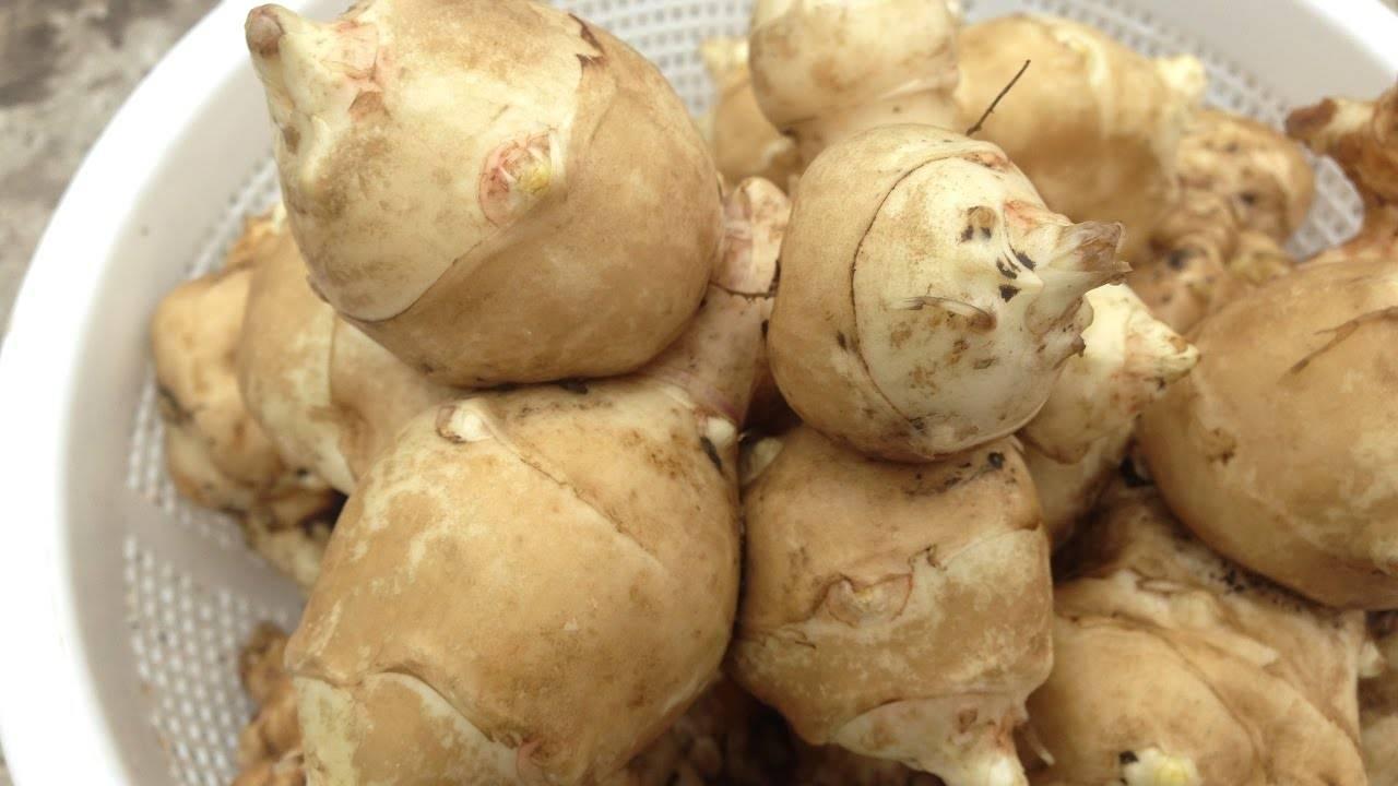 Топинамбур, или земляная груша