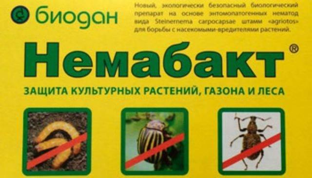 Вредители смородины и методы борьбы с ними