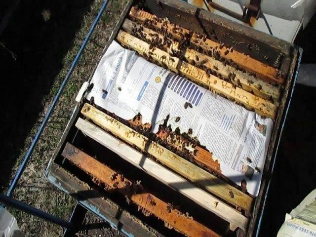 Способы подсадки маток в пчелиные семьи - начинающему пчеловоду