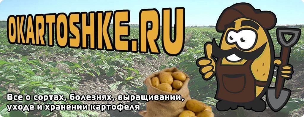 Ультраранний картофель ред соня. характеристика, агротехника и отзывы