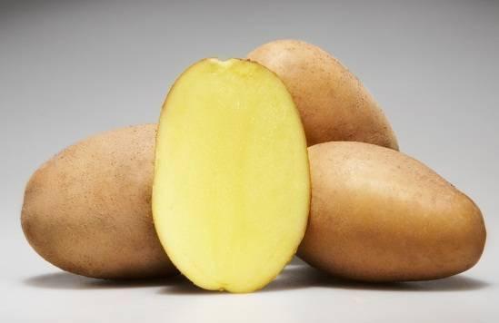 Описание картофеля инара