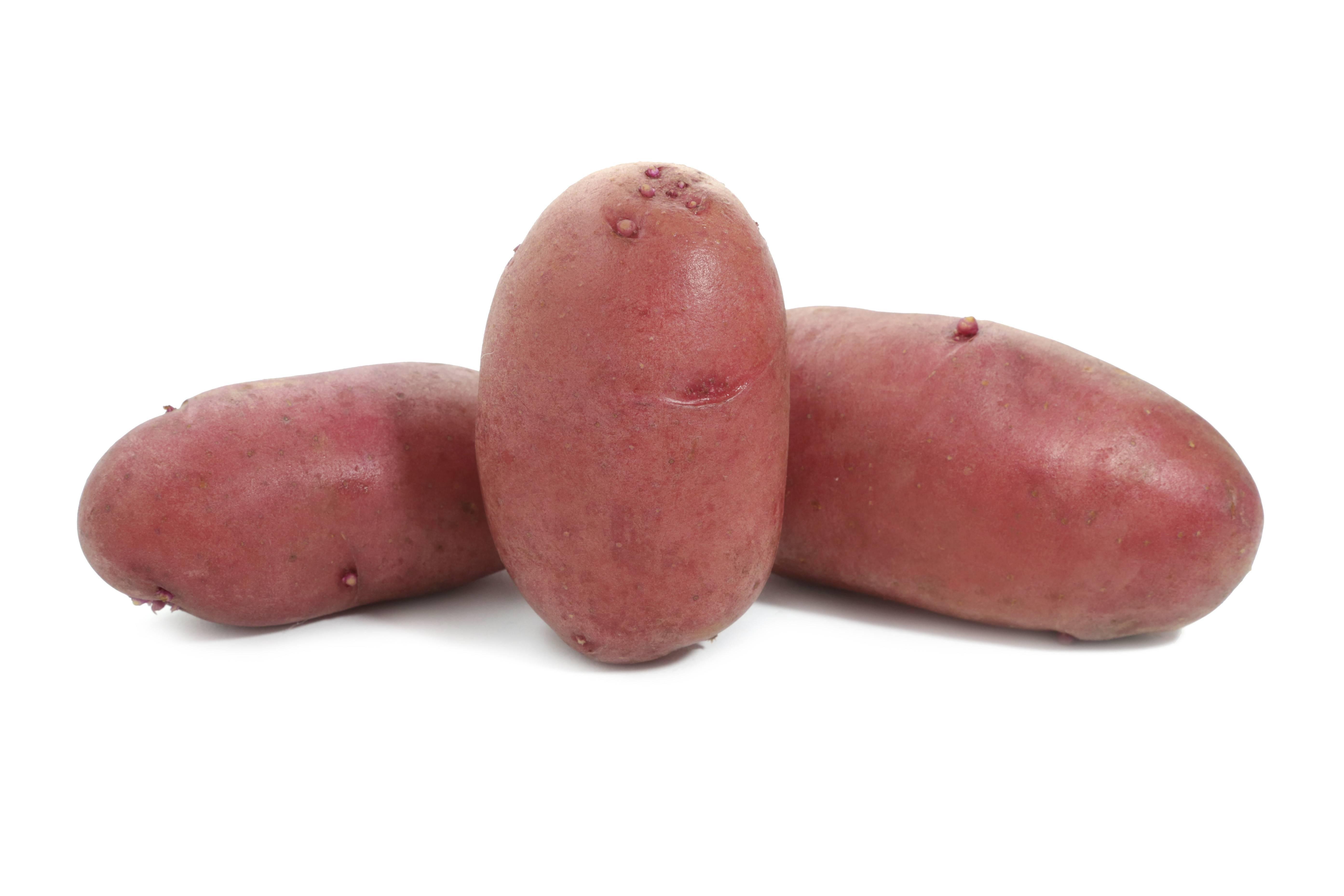 Картошка «мерлот» — что это за сренднепоздний столовый сорт?
