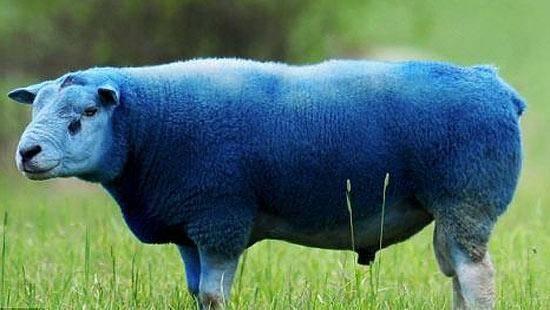 Защита крупнорогатого скота от слепней и оводов