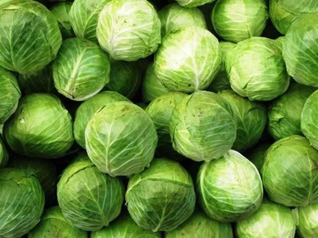 Сорта белокочанной капусты: самые интересные, популярные и урожайные