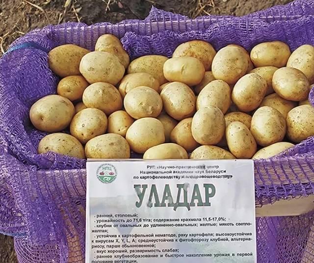 Картофель — уладар: описание сорта, фото, отзывы