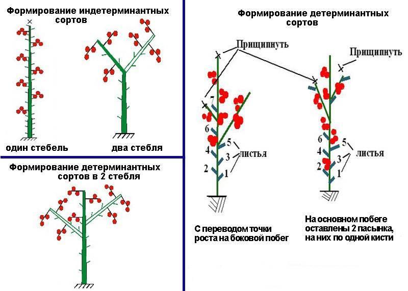 Сочные томаты черри клубничный f1: отзывы об урожайности, описание и характеристики сорта