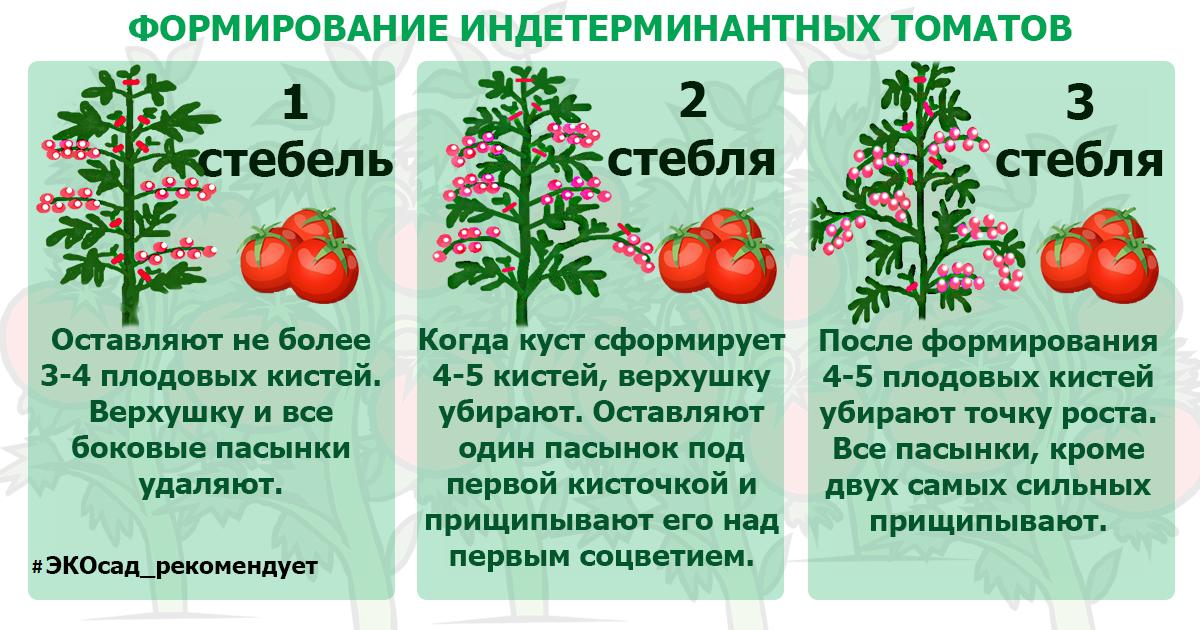 Как правильно пасынковать помидоры и нужно ли вообще это делать