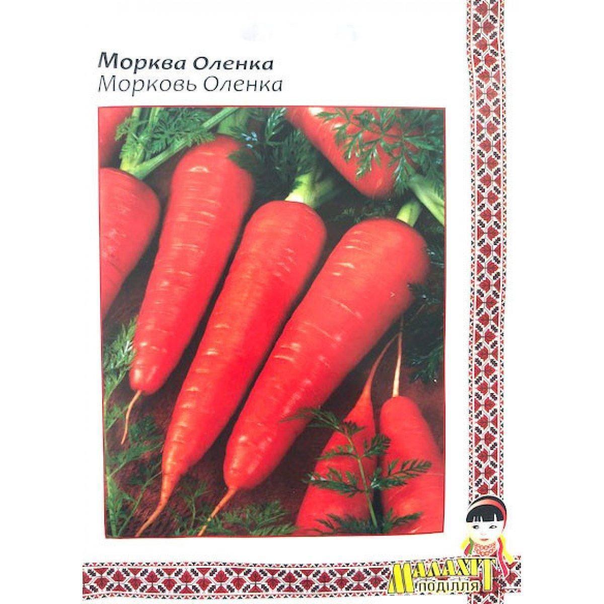 Морковь витаминная 6: характеристика и описание сорта