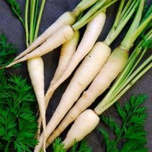 Сорта белой моркови